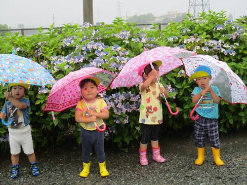 IMG_0681.JPG雨の日ゆり