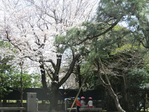 尊徳記念館花見IMG_1619.JPG